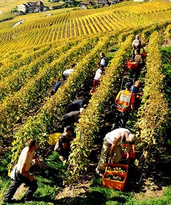 les 4 saisons viticoles